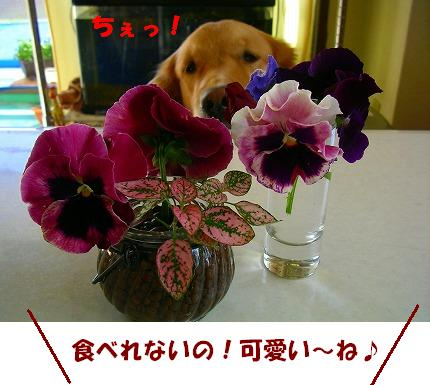 SANY0022_20081120195346.jpg