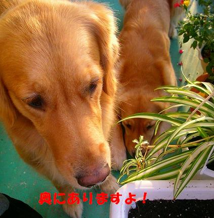 SANY0023_20081015075612.jpg