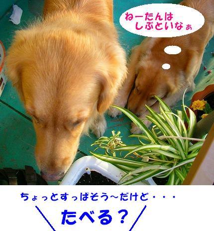 SANY0024_20081015075627.jpg