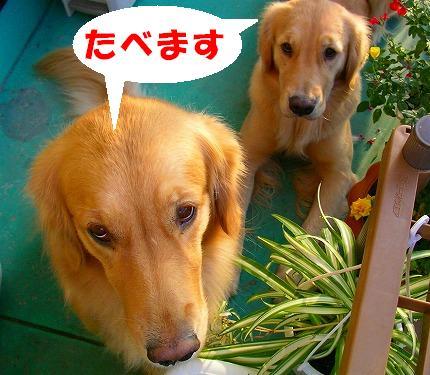 SANY0026_20081015075636.jpg