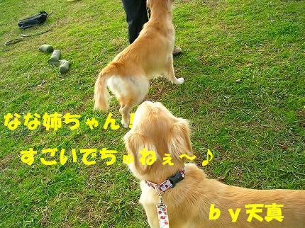 SANY0028_20081130144106.jpg