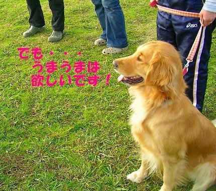 SANY0029_20081130144147.jpg