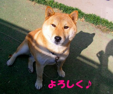SANY0032_20081023125342.jpg
