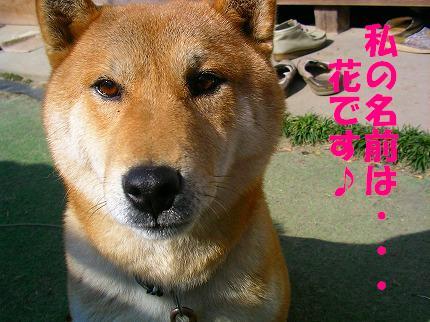 SANY0033_20081023125332.jpg