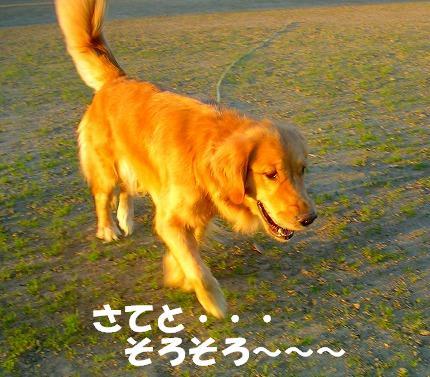 SANY0039_20081113232110.jpg