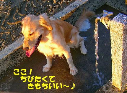 SANY0046_20081119200151.jpg