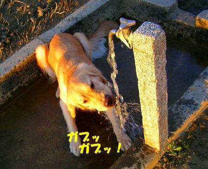 SANY0048_20081119200206.jpg