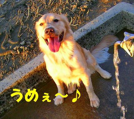SANY0049_20081119200221.jpg