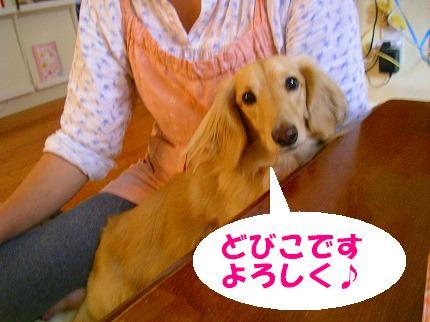 SANY0089_20081024062140.jpg