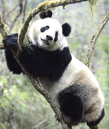 0531_panda.jpg