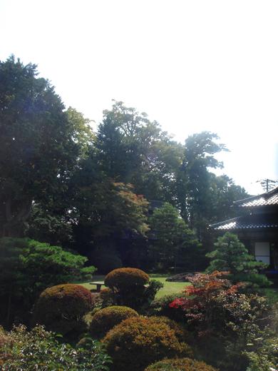 nehangunjo7431 庭の木々