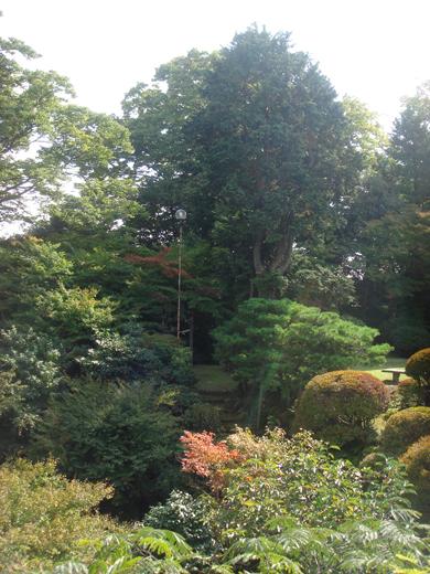nehangunjo7432 木々