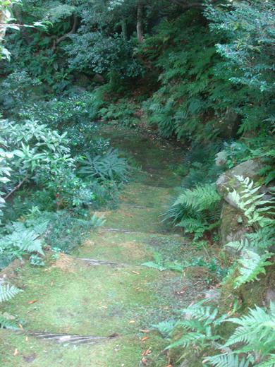 nehangunjo7438 庭の苔道
