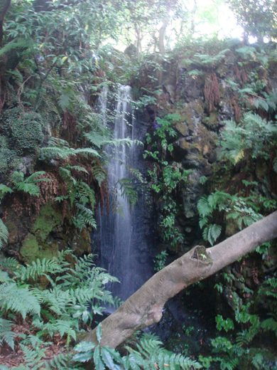 nehangunjo7443 滝と幹