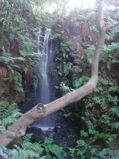 nehangunjo7444 滝と木