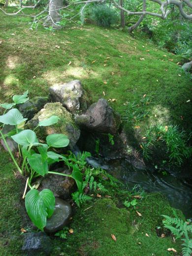 nehangunjo7455 苔と蔓