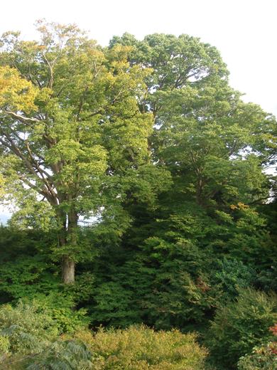 nehangunjo7493 木々