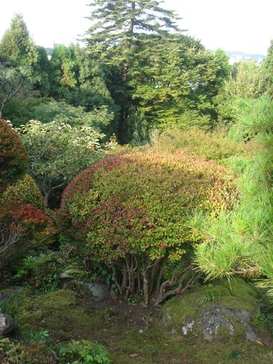 nehangunjo7509 植栽