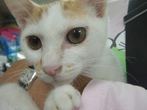 ミグノン猫