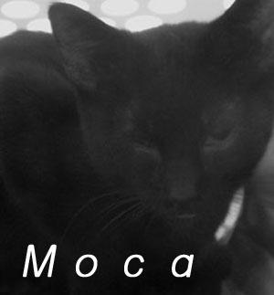 モノクロM