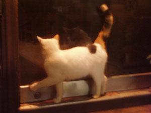 うらら恋猫2