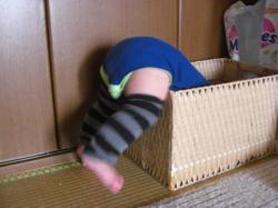 箱入り息子2