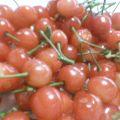 Japanese cherries