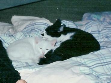 1990.ニヤ・キキ