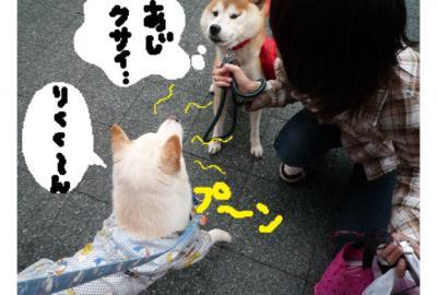 縺ゅ§縺上&縺Юconvert_20081030004316