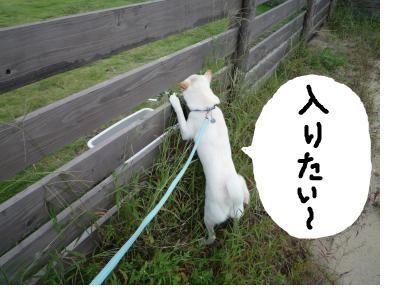 snap_nobirumaruajinikkori_2008100111458.jpg