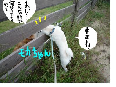 snap_nobirumaruajinikkori_2008100112550.jpg