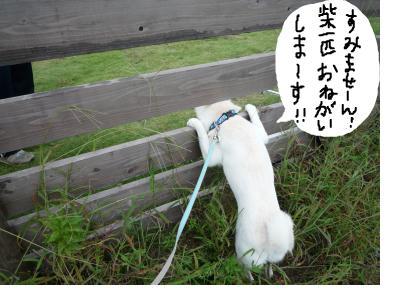 snap_nobirumaruajinikkori_200810011419.jpg