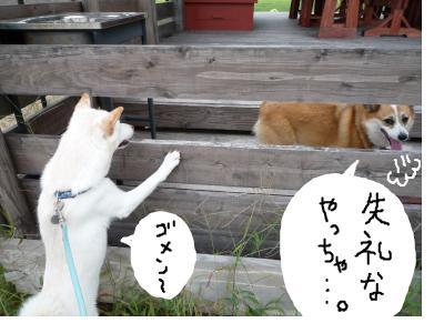 snap_nobirumaruajinikkori_2008100115910.jpg