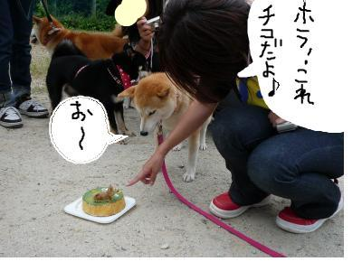 snap_nobirumaruajinikkori_2008100122422.jpg