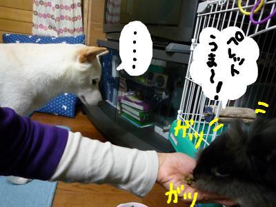 snap_nobirumaruajinikkori_2008100122939.jpg
