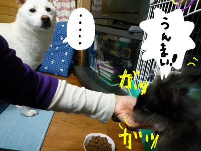 snap_nobirumaruajinikkori_2008100123357.jpg
