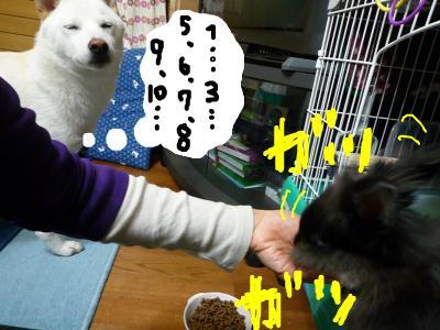 snap_nobirumaruajinikkori_2008100123940.jpg