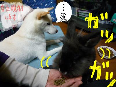 snap_nobirumaruajinikkori_2008100124610.jpg