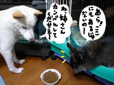 snap_nobirumaruajinikkori_200810012539.jpg