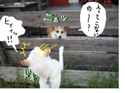 snap_nobirumaruajinikkori_20081001256.jpg
