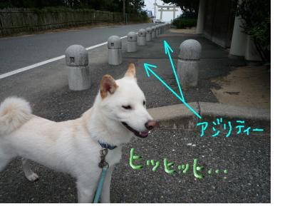 snap_nobirumaruajinikkori_200810012951.jpg