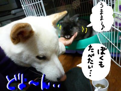 snap_nobirumaruajinikkori_2008100131256.jpg