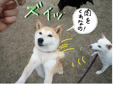 snap_nobirumaruajinikkori_20081001382.jpg