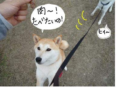 snap_nobirumaruajinikkori_200810014336.jpg