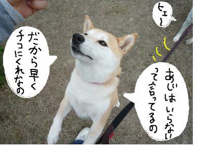 snap_nobirumaruajinikkori_20081001518.jpg