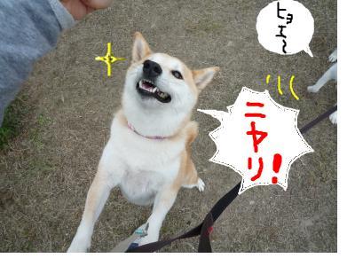 snap_nobirumaruajinikkori_20081002234.jpg