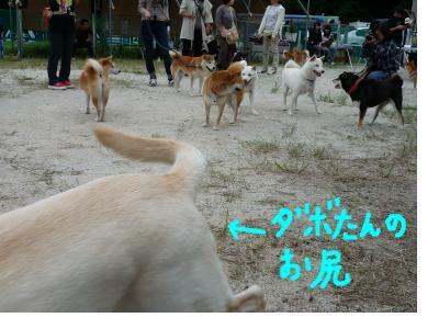 snap_nobirumaruajinikkori_20081003235.jpg