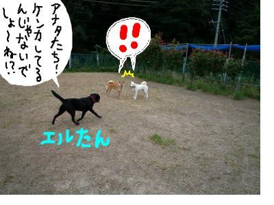 snap_nobirumaruajinikkori_20081003299.jpg