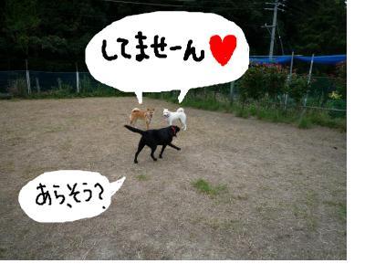 snap_nobirumaruajinikkori_200810033532.jpg