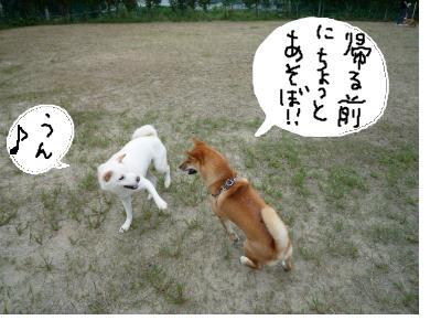snap_nobirumaruajinikkori_20081003942.jpg